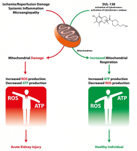 mitochondrial-overview-machanism-of-action